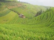 Terrazze del Dragone di Longji