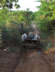 MY Bagan002