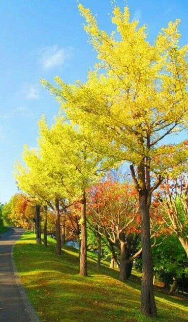 l'autunno in Giappone