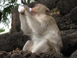 monkey-temple-lopburi