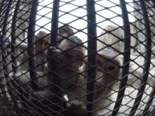Monkey Temple - Lopburi (3)