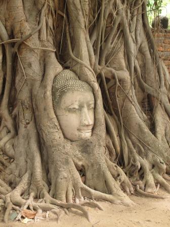 testa-di-statua-incastrata-neltronco-di-un-albero-ayuttaya